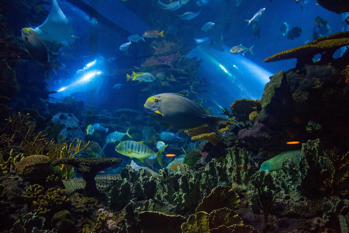 Множество видов тропических рыб в пекинском океанариуме
