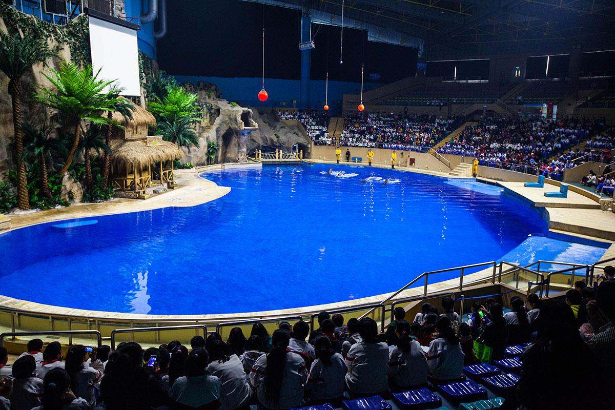 Шоу в бассейне пекинского океанариума