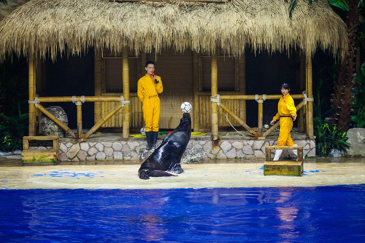 Цирковое шоу с тюленями в пекинском океанариуме